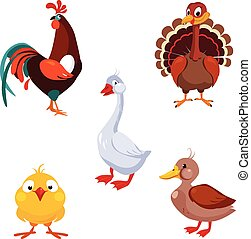 Poultry Domestic Birds, Vector Illustration Set - Poultry...