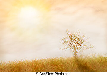 abstract nature background. made with color filters in soft...
