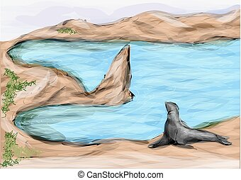 seal on galapagos island. abstract tropical beach