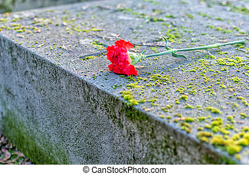 tomb - stone tomb covered by a red carnation flower