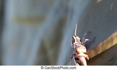 Close up of Grasshopper