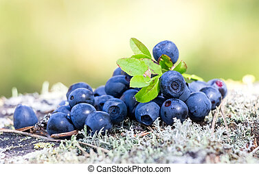 Ripe bilberry in the summer close up