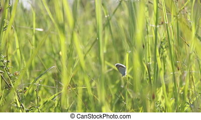 Butterfly in the green grass.