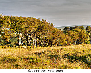 Exmoor trees, autumn colours UK, natural landscape -...
