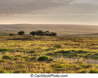 Exmoor evening. Devon, England. - Wid open moorland.