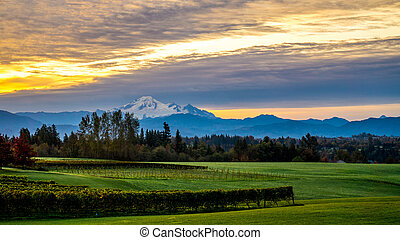 Sunrise over Mt Baker and Vineyard - Sunrise over Mount...
