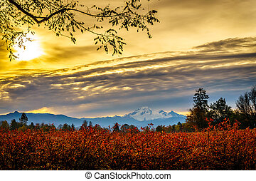 Sunrise ove the Blueberry Fields - Sunrise over Mount Baker...