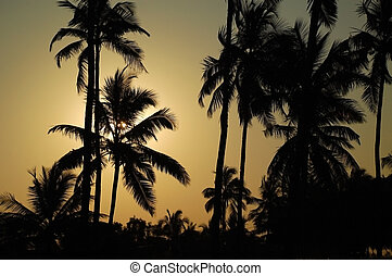 Whispering Palm Trees