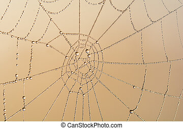 cobweb coverd with water  drop