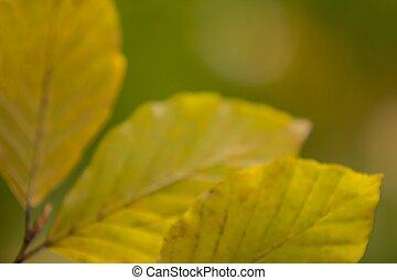 Natur Herbst Details Hintergrund - Nature autumn details...