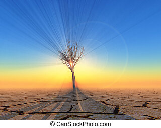 dead tree in the desert on sunset background