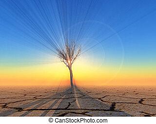 dead tree in the desert on sunset background