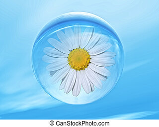 biosphere - daisy flower inside a water bubble