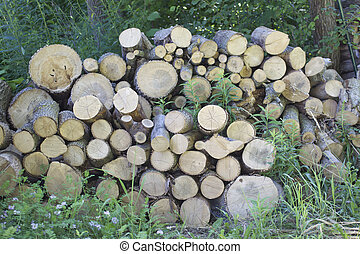 Stack of freshly cut wood in the green foilage