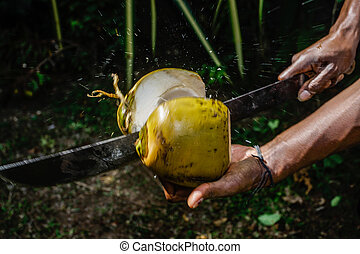 Man cutting a coconut in half - Image of man's hands cutting...