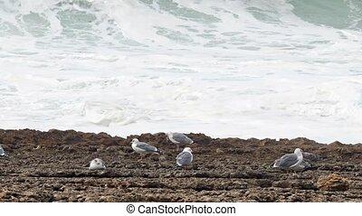 Sea Gull Sitting on a Rock