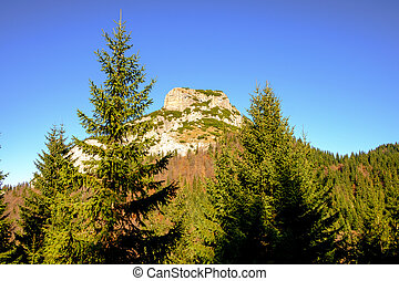 Rocky mountain peak with forest trees in foreground, Mala...