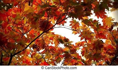 autumn in japan - Autumn in Hokkaido Japan natural...
