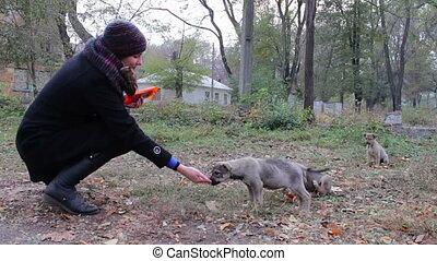 Woman feeds the homeless puppies on the street. - Three...