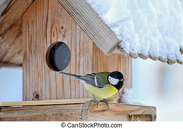 Great tit bird on a wooden house - The Great tit bird Parus...