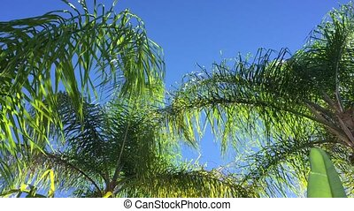 Sunny palm tree in gentle tropical breeze.