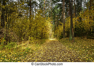 Forest with yellow leaves - Lithuanian landscape come the...