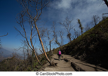 High altitude dead tree on way to Kawah Ijen Crater,...