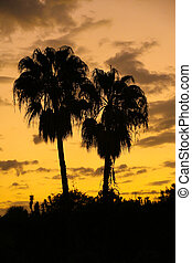 Pair of Palms - Whilst sitting having a beer in the Port of...
