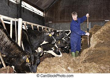Feeding calfs