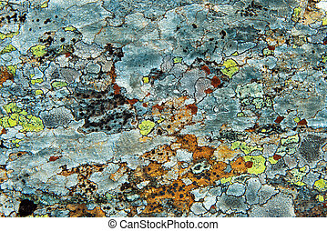 lichen on stone - Texture Of Multi-Colored Lichen On A Rock...