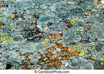 lichen on stone - Texture Of Multi-Colored Lichen On A Rock...
