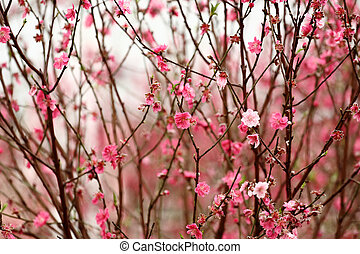 Chinese new year decoration flower-peach blossom