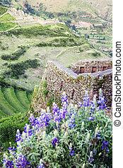 Pisac ruins - Terraces in Pisac ruins in Sacred Valley;...