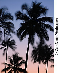 Silhouettes of Vibrating Palm Trees