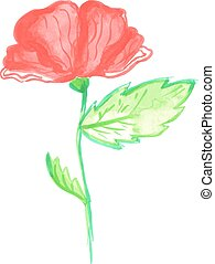 Watercolor poppy illustration. Vector