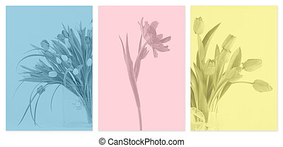 tres, monotone, flor, paneles,