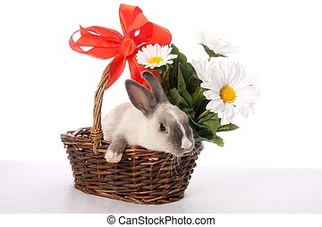 Bunny Rabbit in Wicker Basket - Cute bunny rabbit in a...