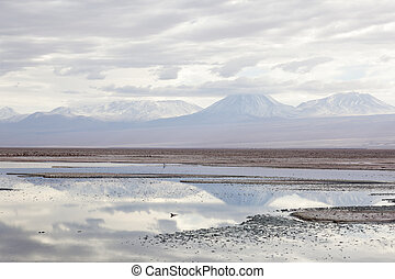 Salar Atacama, North of Chile