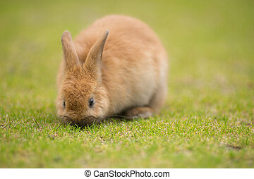 Wild Bunny Feeds on Local Grasses Cute Rabbit - Valdez...