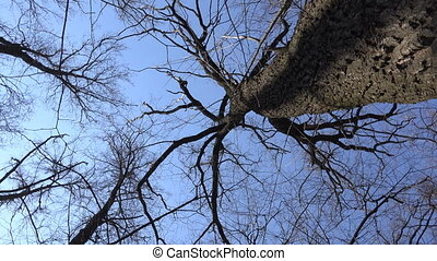 High Angle of View of Giant Trees Blue Sky - High Angle of...