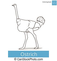 Ostrich learn birds coloring book vector - Ostrich learn...