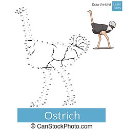 Ostrich bird learn to draw vector - Ostrich learn birds...