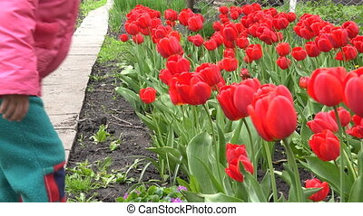 Cute Little Girl Smelling Red Tulipes - Cute Little Girl...