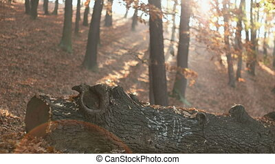 Fall Season in the Forest - Calm Tranquil scene while...