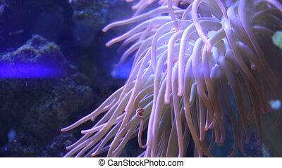 Beautiful Tropical Soft Coral Reef - Beautiful Tropical Soft...