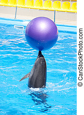 Dancing dolphin with ball at pool