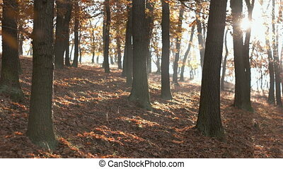 Fall Season in the Forest - Static look at calm tranquil...