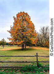 Bucolic landscape of horses grazing under Autumn trees -...