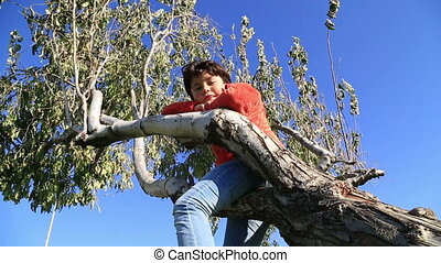 Happy child sitting on the tree - Happy young boy sitting on...