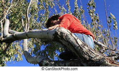 Happy young boy  in a tree - Child climbing a tree